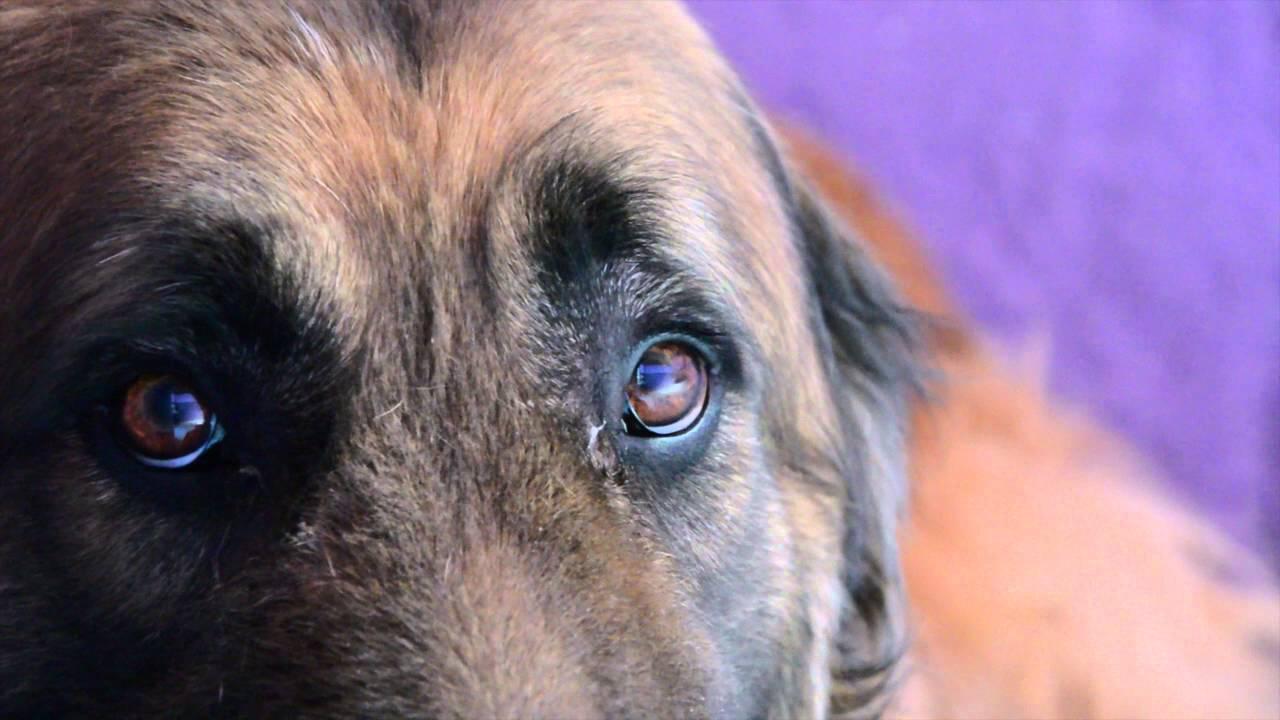 Maltrato animal: agresores y asesinos serán encarcelados entre 3 a 5 años según Ley 30407