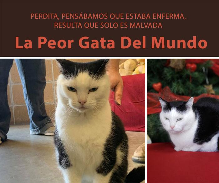 La peor gata del mundo está en busca de un hogar