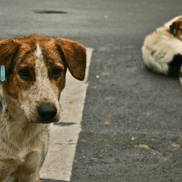 Perros callejeros serán rescatistas o policías en México