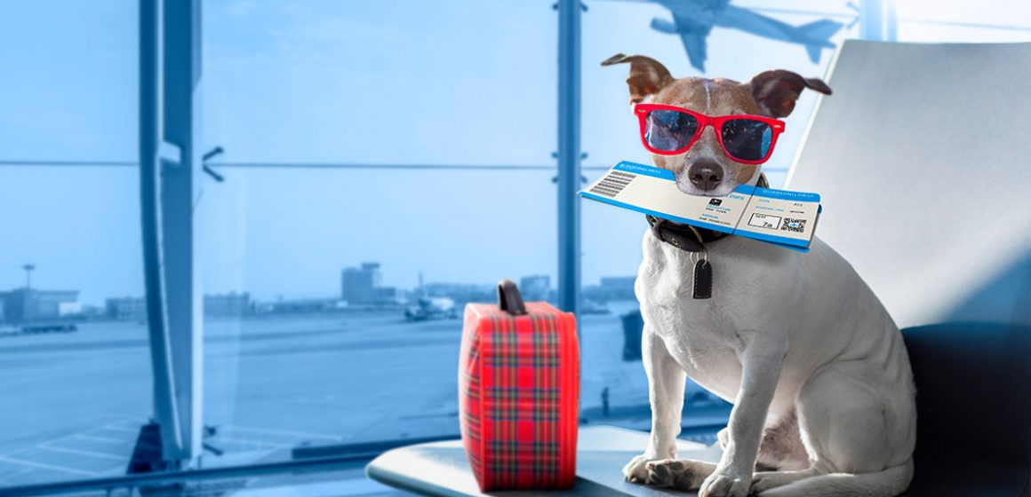Requisitos para la salida e ingreso de mascotas al país