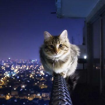 ¿Conoces bien a los gatos? Mira estos 10 datos curiosos