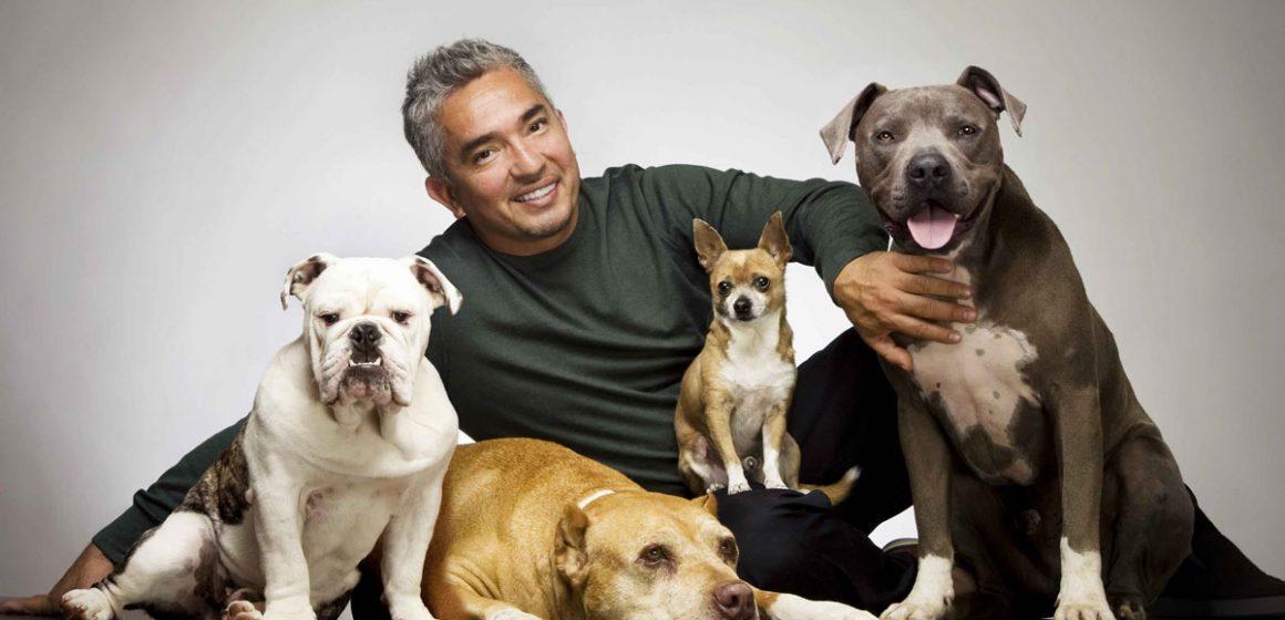 Humanizar a los animales también es maltrato, considera César Millán