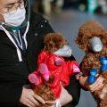 Los insólitos recursos para proteger a las mascotas chinas del coronavirus