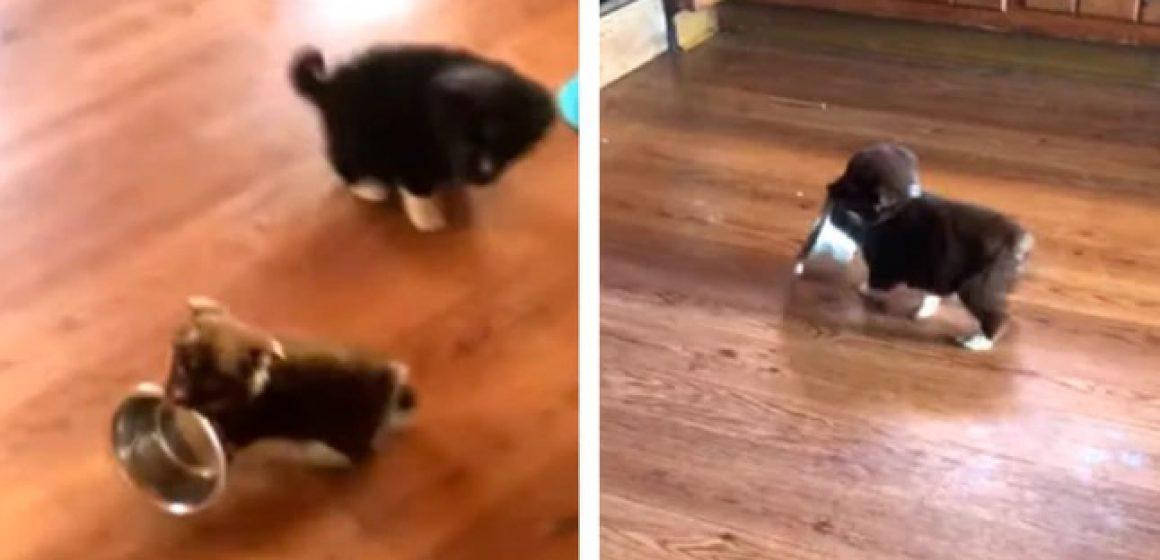 Perro celoso ve a su dueña acariciando a sus hermanos y tiene curiosa reacción