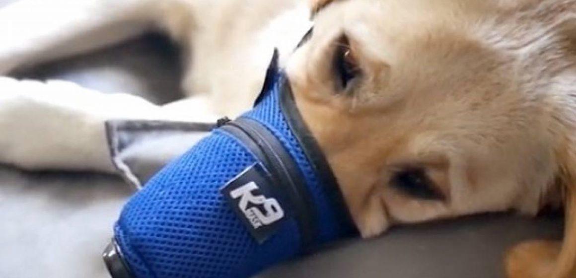 China: mascotas son abandonadas para evitar la propagación del coronavirus