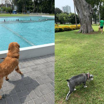 ¿Sabías que el Circuito Mágico del Agua es Pet friendly?