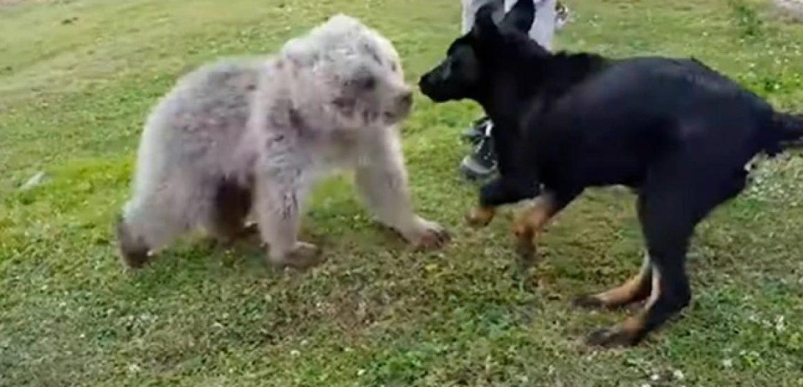 Perro conoce a oso bebé y se convierten en los 'mejores amigos'