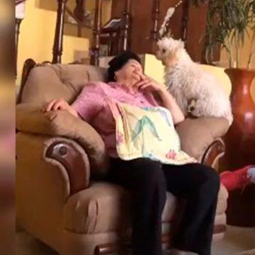 Mujer se queda dormida y su perro le juega cruel broma tras observarla