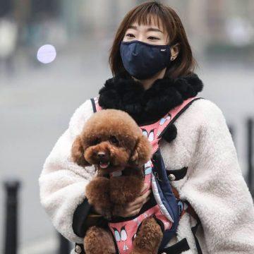 El temor por el coronavirus llegó al mundo de las mascotas, pero tú tranquilo #PetFriend. No es lo que parece
