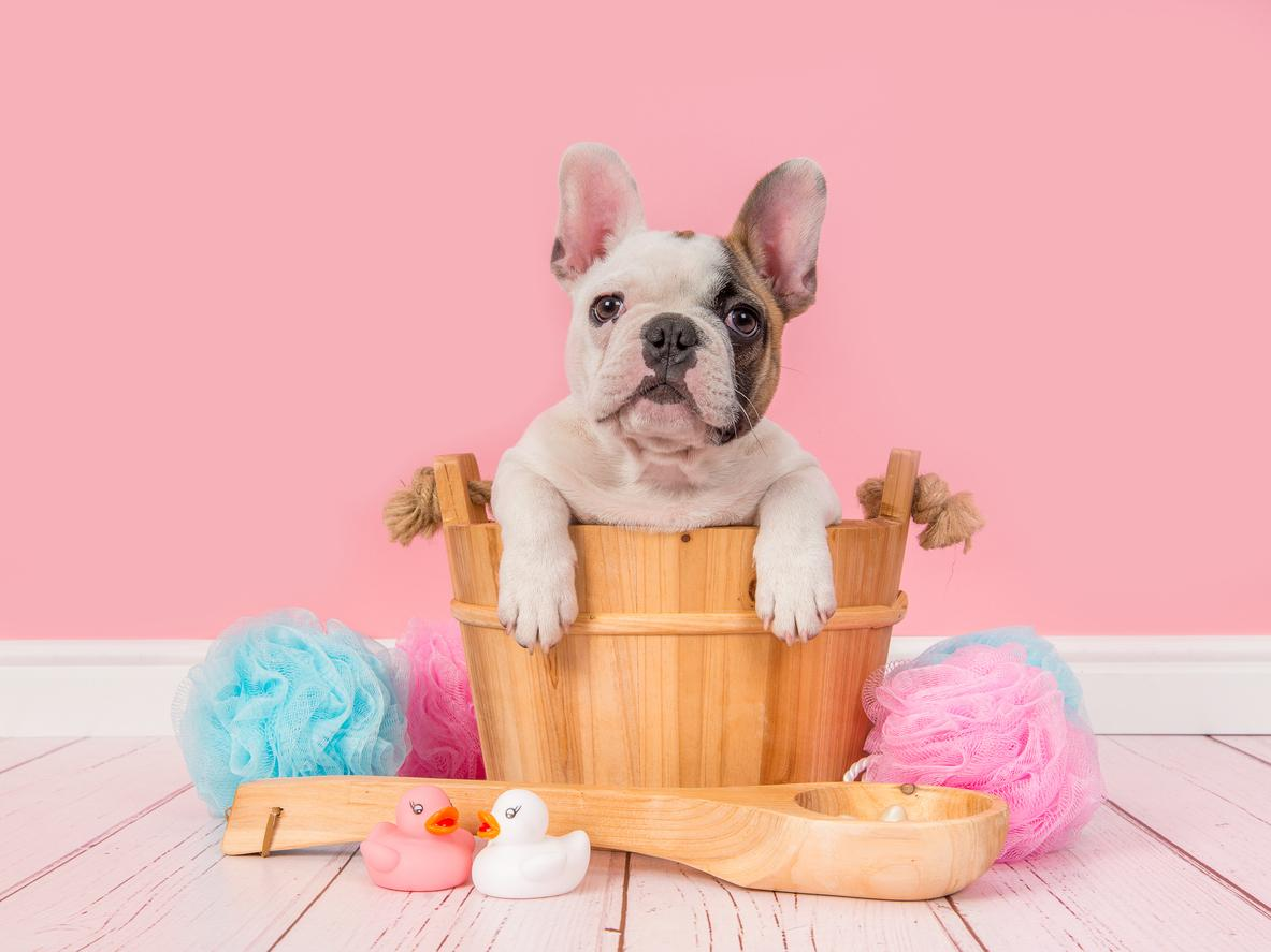 6 consejos al momento de bañar a tu perro