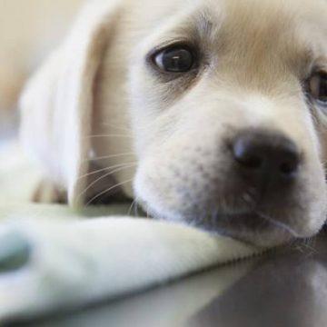 Todo lo que tienes que saber del coronavirus en perros