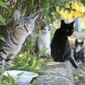 20 de febrero: ¿Día Mundial del Gato?