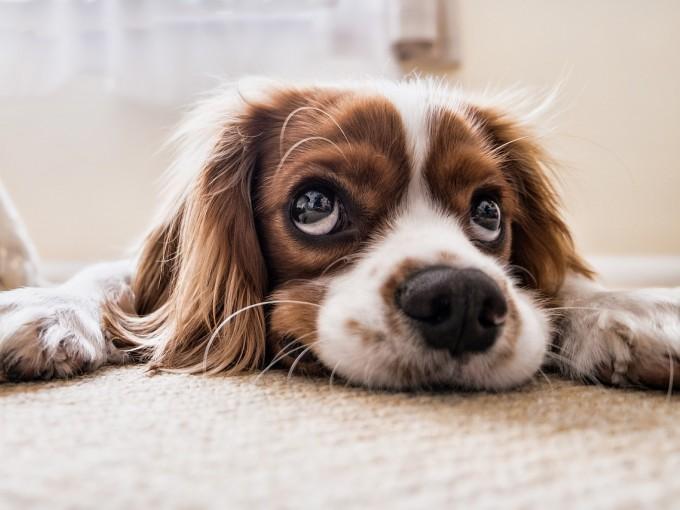 Estados Unidos está cerca de aprobar ley que prohibirá venta de mascotas