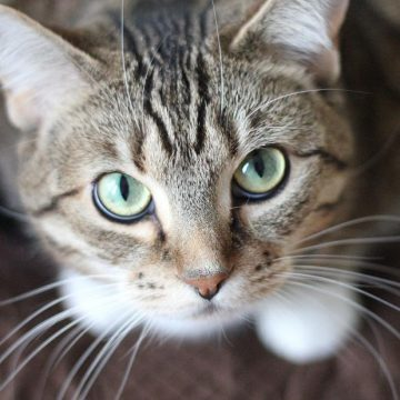 ¿Sabes cómo convivir con tu gato?