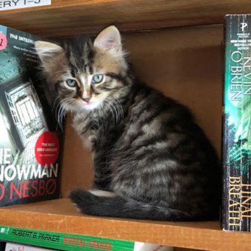 Gatos son la atracción en una biblioteca canadiense