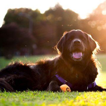 ¿Por qué a tu perro le gusta reposar bajo el sol?