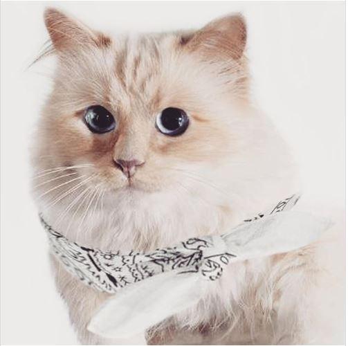 Día Internacional del Gato: conoce a Choupette Lagerfeld, la gata más rica del mundo