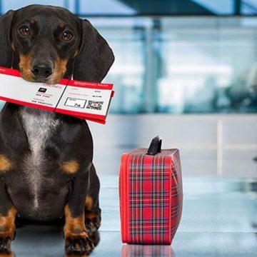 Aerolíneas donde puedes viajar con tu mascota en cabina