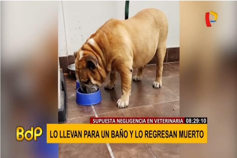 Llevó a bañar a su perro a veterinaria y se lo entregaron muerto Fuente: Panamericana