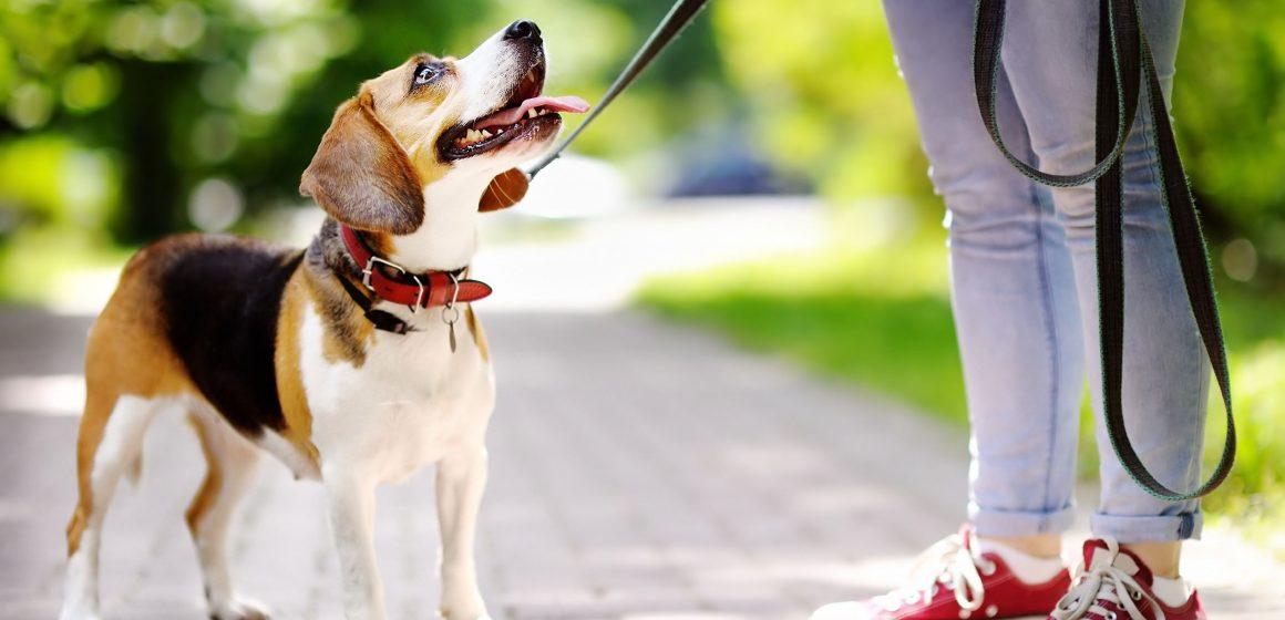 Este es el tipo de correa ideal para nuestros perros