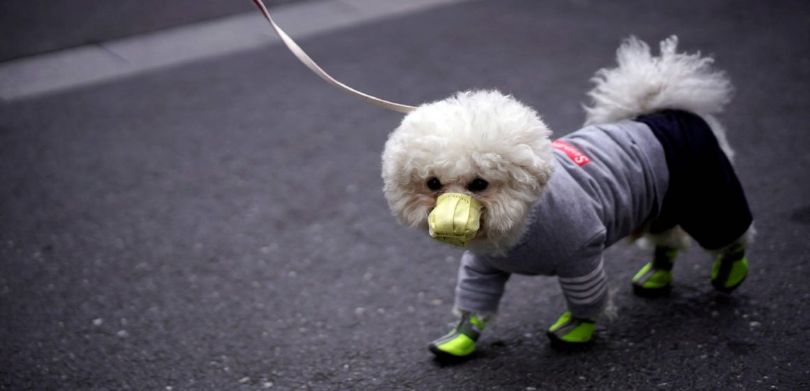 Covid-19: consejos para evitar que tus mascotas sean portadores pasivos