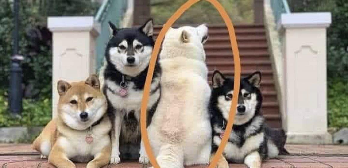 Hombre realiza graciosas fotos a sus mascotas y uno de estos las arruina de la mejor manera
