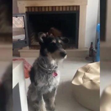 Mujer conversa con su perro sobre el coronavirus y la respuesta conmueve en las redes