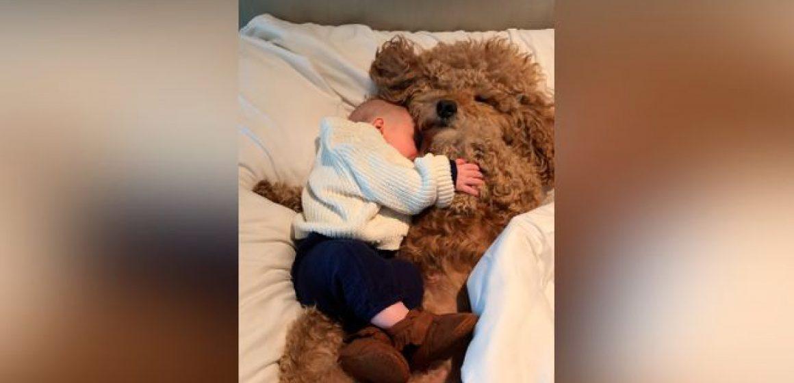 Bebé y mascota protagonizan tierna escena que cautiva en redes sociales