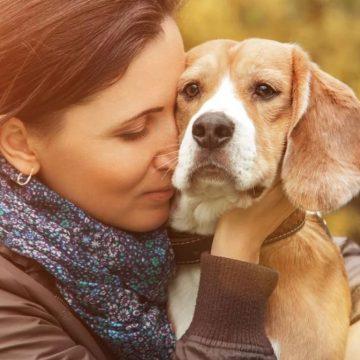 Covid-19: protectora de animales acoge a perros de fallecidos por coronavirus