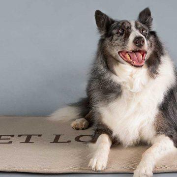 Crean camas terapeuticas para mascotas