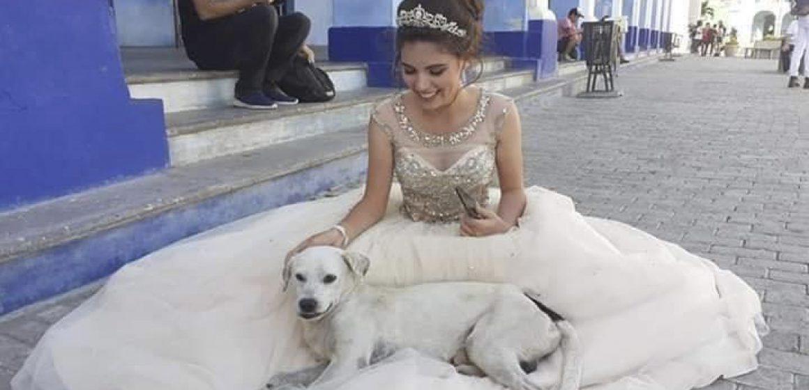 Quinceañera tiene adorable gesto con perro callejero que se metióen su sesión de fotos