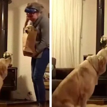 Divertida reacción de un perro al ver a la nueva mascota de la casa