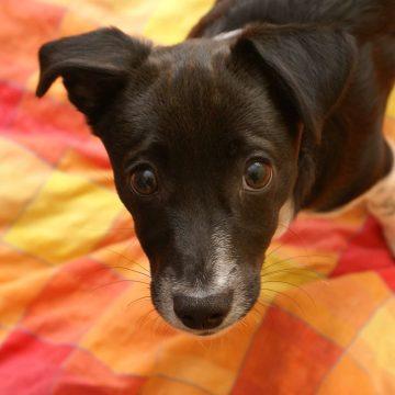 Covid-19: recomendaciones para cuidar a nuestras mascotas durante la cuarentena