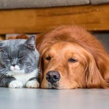 COVID-19: divertidos juegos para perros y gatos durante la cuarentena