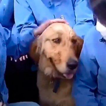 COVID-19: un perro se niega a separarse de los médicos que lo cuidaron durante cuarentena por coronavirus en China