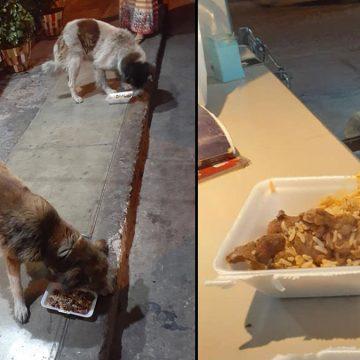 Restaurante brinda comida sobrante a perros callejeros