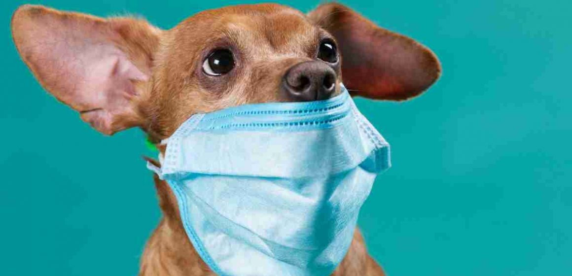 Mascotas no transmiten COVID-19, según OMS