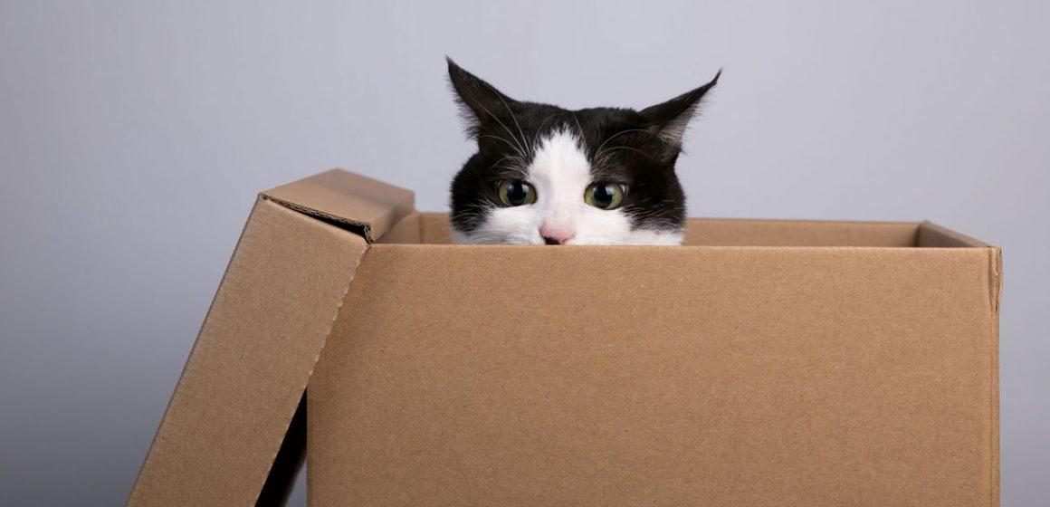 ¿Por qué les encantan las cajas de cartón a los gatos?