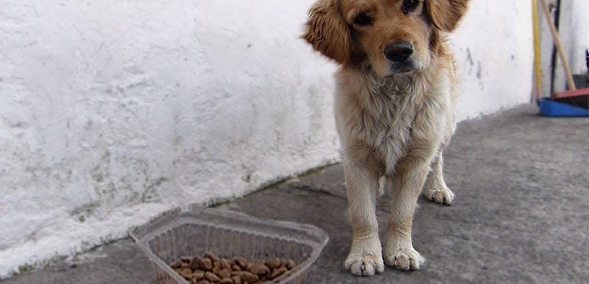 España: regalan comida para humanos y perros