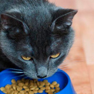 COVID-19: ¿Será cierto qué existe un gato en Bélgica con el nuevo coronavirus?