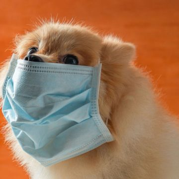 COVID-19: piden no poner mascarillas a mascotas
