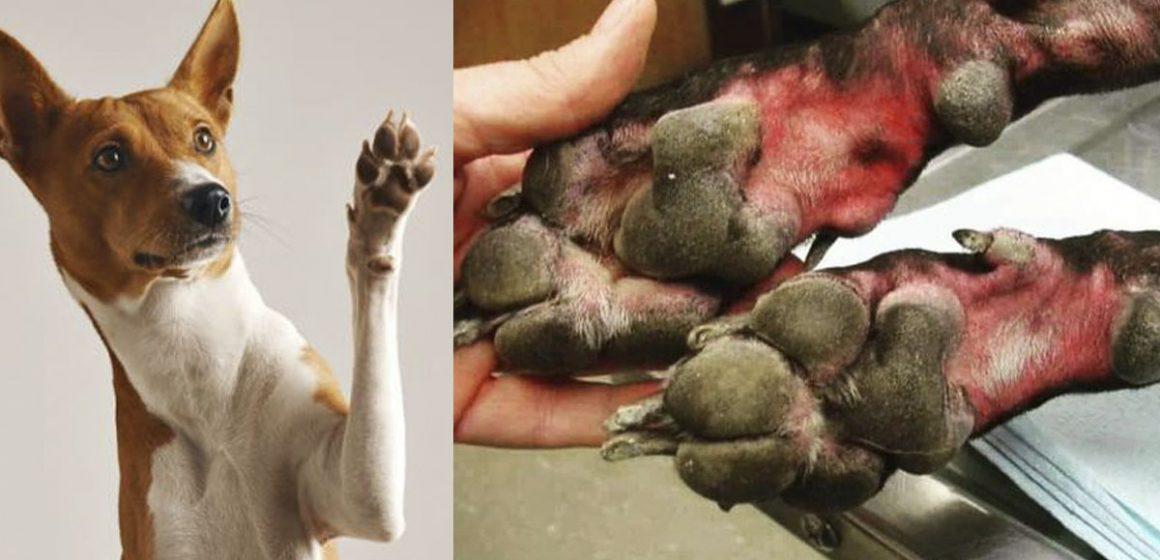 Covid-19: no debemos de usar lejía para limpiar las patas de las mascotas