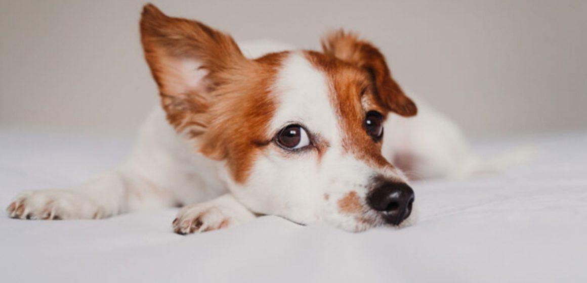 COVID-19: qué hacer (y lo que no) con tu perro durante el estado de alarma