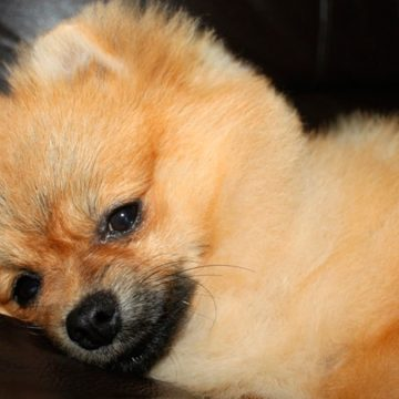 COVID-19 en España: muchas mascotas están siendo abandonadas, asesinadas o llevadas a refugios