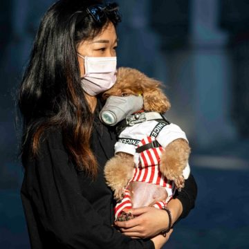 Las mascotas no se infectan con COVID-19, asegura WSAVA