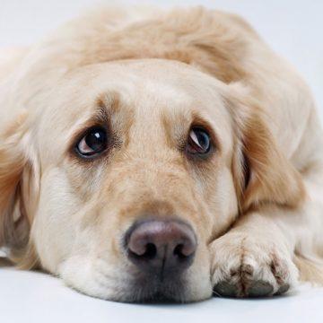 Evita que tu perro se estrese por la cuarentena