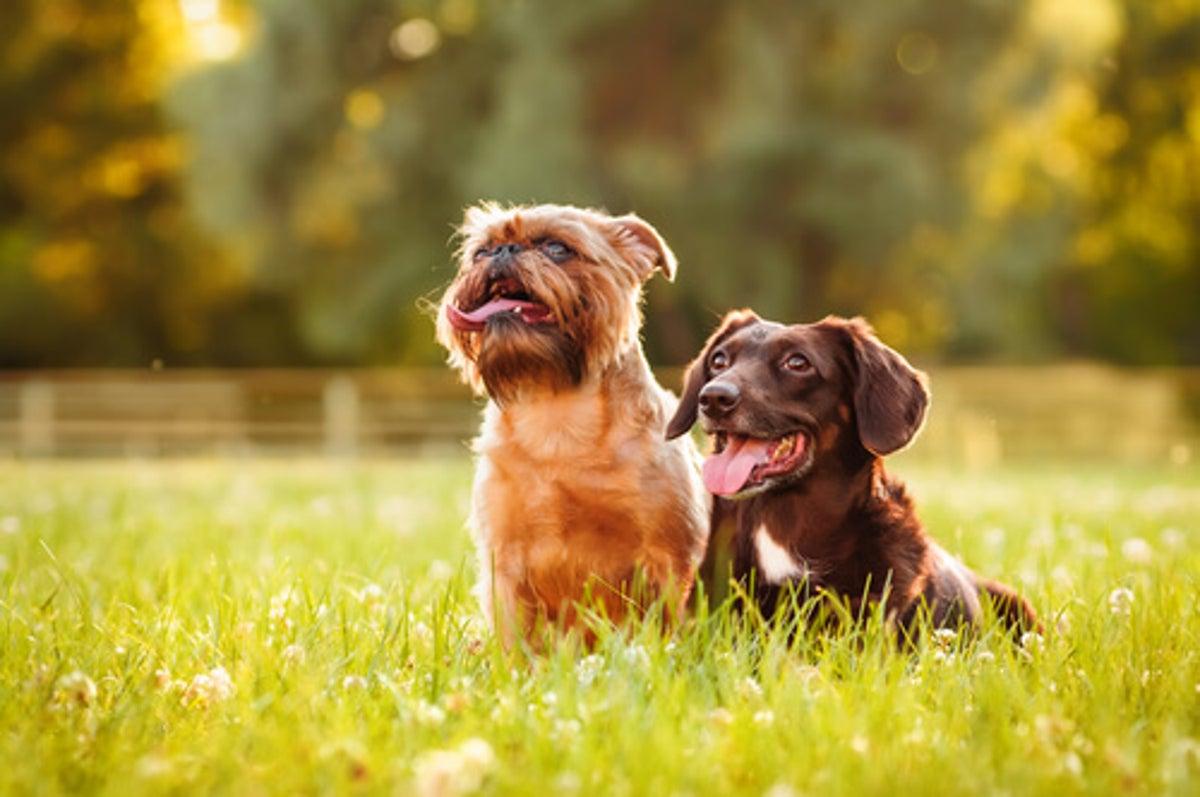 La importancia de aplicar bloqueador solar a nuestras mascotas