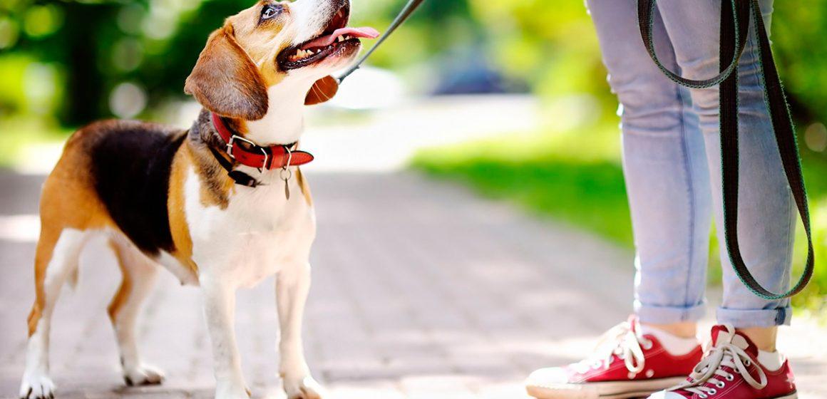 COVID-19: ministra del Ambiente exhorta a los ciudadanos que no saquen a pasear a sus mascotas durante estado de emergencia