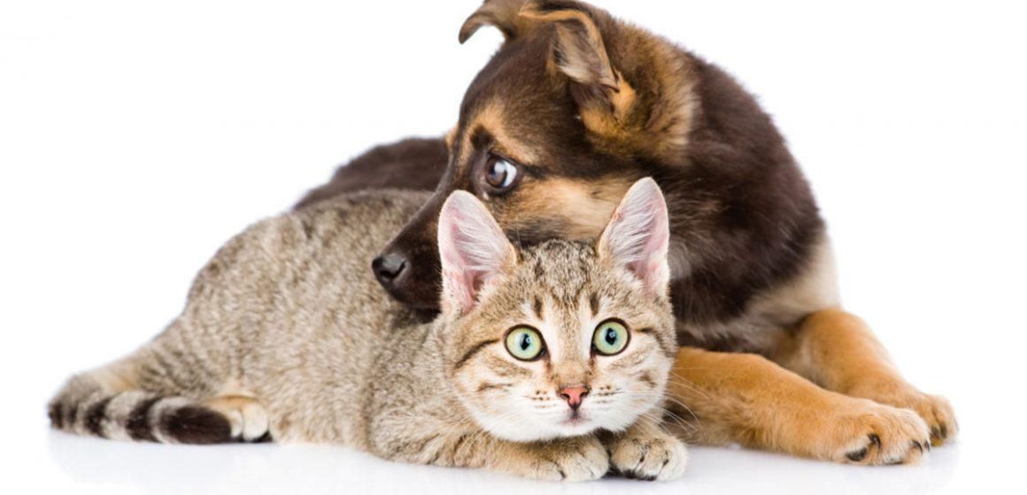 ¿El coronavirus afecta a las mascotas?