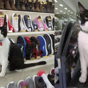 Silvestre: el gato «gerente» de una empresa